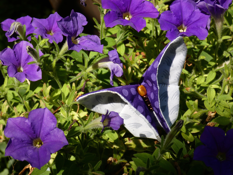 papillon_05